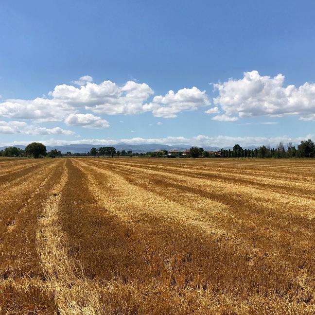 I campi di grano attorno a Modena sono bellissimi da fotografare durante un'escursione